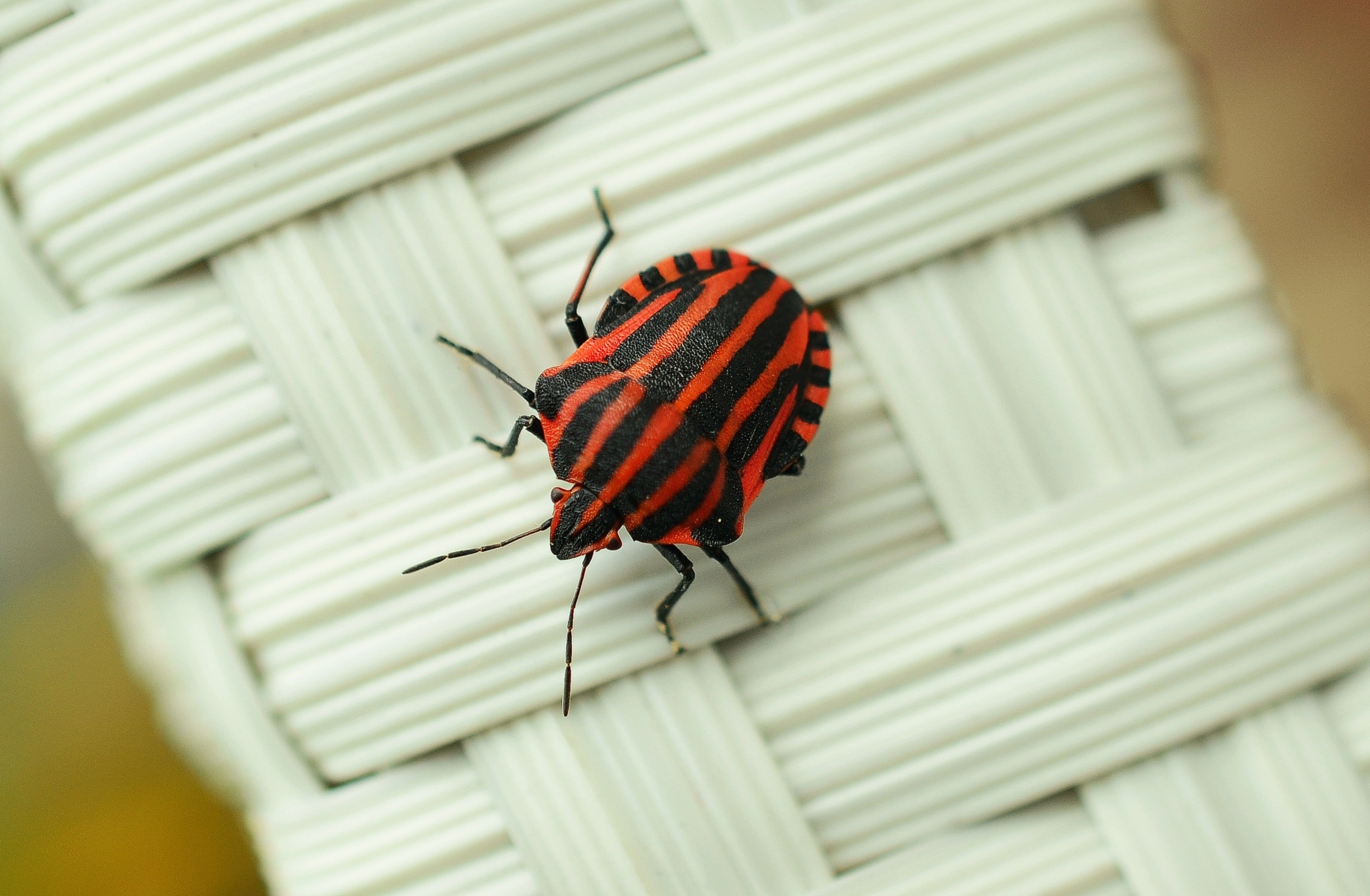 bug-close-up-focus-35051